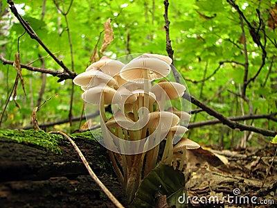 Mushroom family in the sunlight