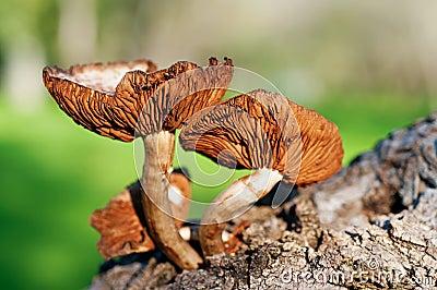 Mushroom forest tree