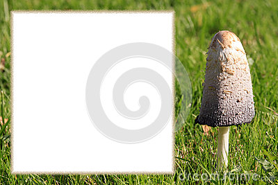 Mushroom frame with copy space for own text