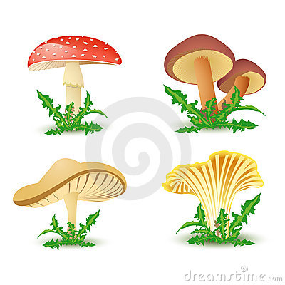 Free Mushroom Icons Royalty Free Stock Photography - 14228147