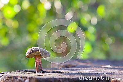 Mushroom lubricator