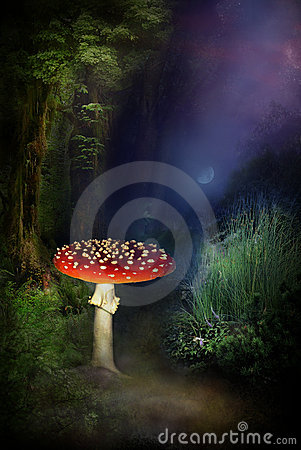 Mushroom in magical forest