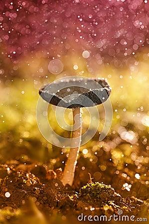 Free Mushroom Of Autumn Royalty Free Stock Photography - 27032407