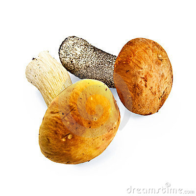 Mushroom orange-cap boletus and cep