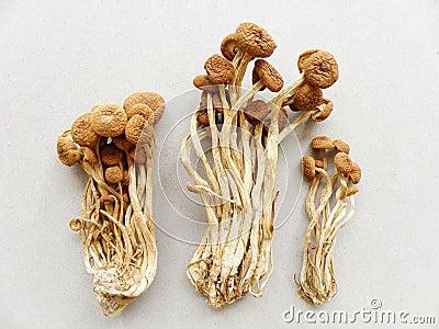 Mushroom oriental, dried foods