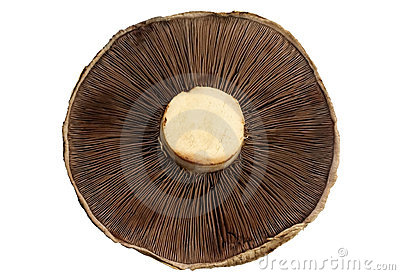 Mushroom (with Path)