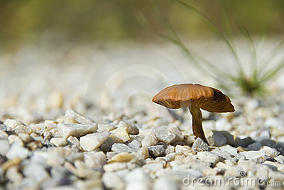 Mushroom on pebble