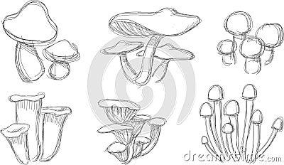 Mushroom Sketch Set
