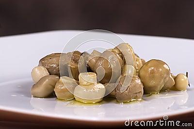 Mushroom starter