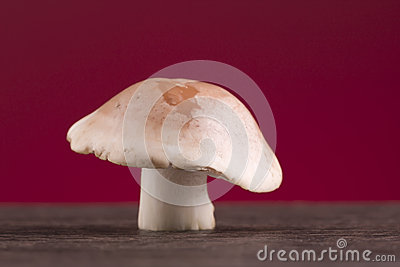Mushroom on a table