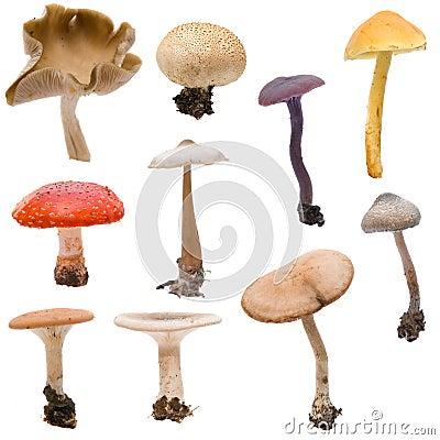 Free Mushroom & Toadstool Montage Stock Image - 3438541