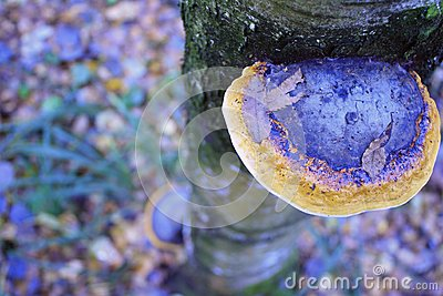 Mushroom on a tree trunk