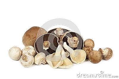 Mushroom Varieties over White