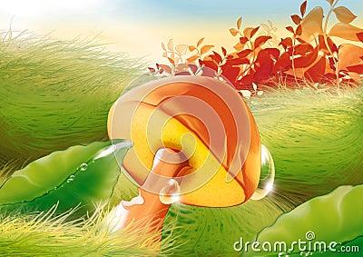 Mushroom & water drops