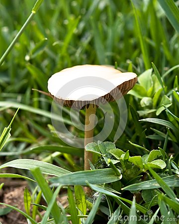 Mushroom in Wild