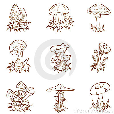 Free Mushrooms Stock Photos - 13610653