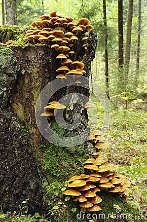 Free Mushrooms Royalty Free Stock Photos - 27468578