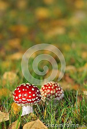 Free Mushrooms Stock Photography - 3279232