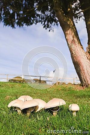 Free Mushrooms Royalty Free Stock Images - 9571829