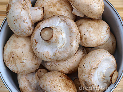 Mushrooms - agaricus