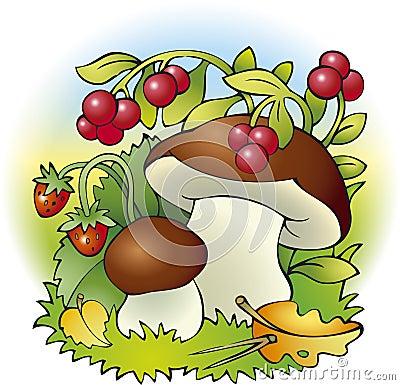 Mushrooms and berries