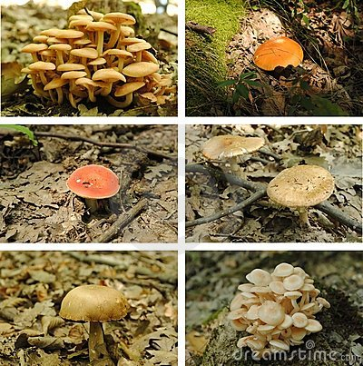Mushrooms collage