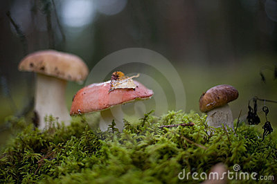 Mushrooms in fall scenery