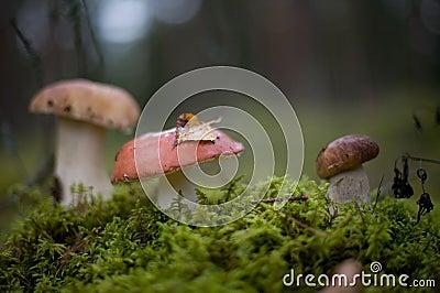 Mushrooms in fall scenery