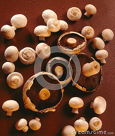 Mushrooms - Food - Fungi