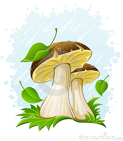 Mushrooms with green leaf in grass under the rain