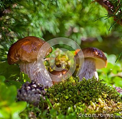 Mushrooms in green vegetation