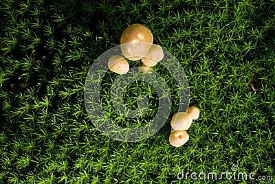 Mushrooms growing on a field vert