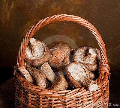 Mushrooms harvest