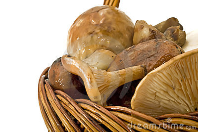 Mushrooms Heap in the basket