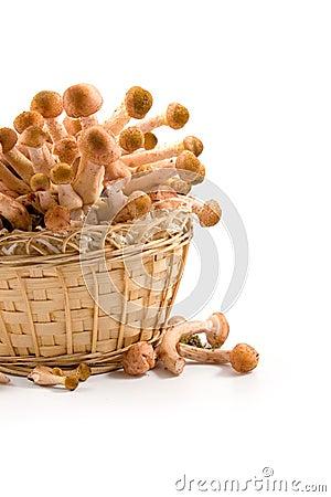 Free Mushrooms In A Basket Stock Image - 15792851