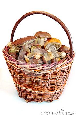 Free Mushrooms In Basket Stock Photos - 16101963