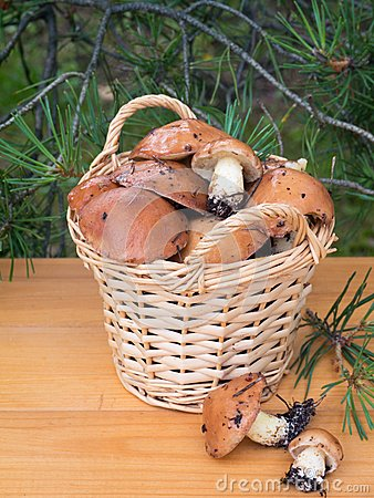 Free Mushrooms In The Basket Under Pine Tree Royalty Free Stock Photography - 56598537