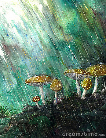 Free Mushrooms In The Rain Royalty Free Stock Photos - 3216138