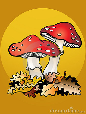 Mushrooms and leafs