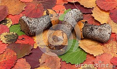 Mushrooms put on autumn sheet