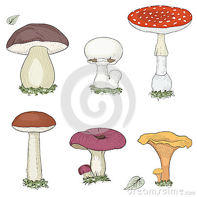 Free Mushrooms Set Royalty Free Stock Photo - 48233805