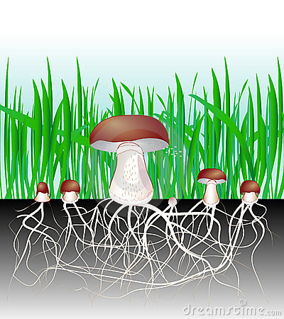 Mushrooms and vegetation. Fungus. Mycelium. Spore