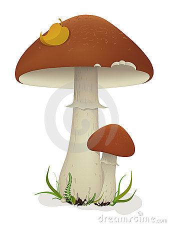 Free Mushrooms With Leaf And Grass Stock Image - 8586841