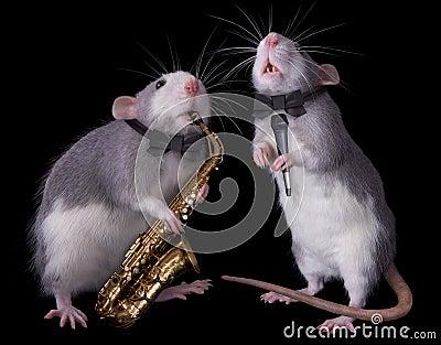 Musical Rats