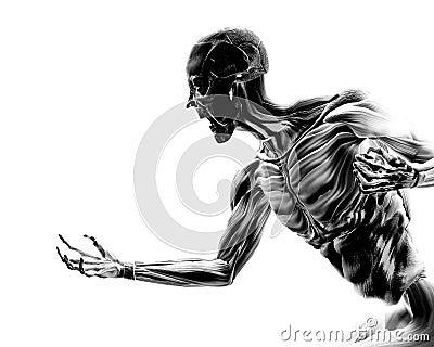 Muskeln auf menschlichem Körper 17