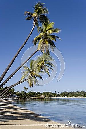 Free Musket Cove In The Yasawa Islands - Fiji Royalty Free Stock Image - 15289326