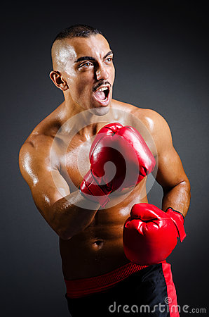 Muskulöser Boxer im Studio