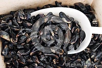 Mussel basket
