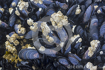 live mussels thawing how to