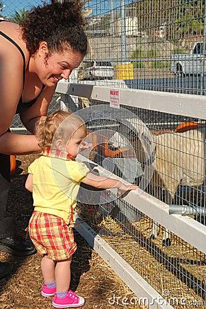 Mutter und Tochter speisen die Schafe